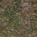 Nature Grass Dry 006