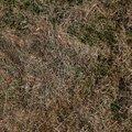 Nature Grass Dry 007