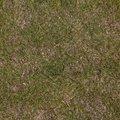 Nature Grass Dry 008