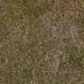 Nature Grass Dry 009