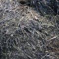 Nature Grass Dry 011