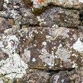 Wall Stone 062