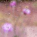 Water Waterdrops 028