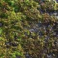 Nature Moss 018