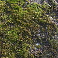 Nature Moss 019