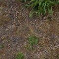 Nature Moss 021
