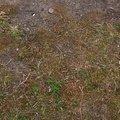 Nature Moss 022
