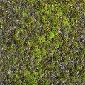 Nature Moss 023
