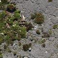 Nature Moss 024