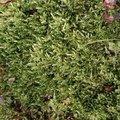 Nature Moss 025