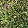 Nature Moss 026