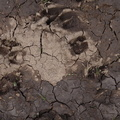 Soil Cracked 019