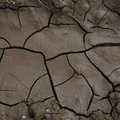 Soil Cracked 017