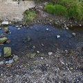 Water Freshwater 015