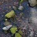 Water Freshwater 016