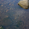 Water Freshwater 017