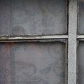 Window 006