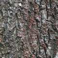 Nature Tree Trunk 063