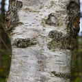 Nature Tree Trunk 066