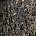 Nature Tree Trunk 060