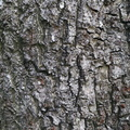 Nature Tree Trunk 062