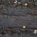 Tyre Tracks 083