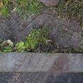 Tyre Tracks 076