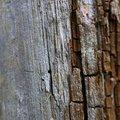 Wood Rotten 002
