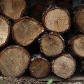 Wood Logs 001