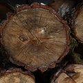 Wood Logs 002