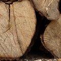 Wood Logs 003