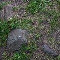 Soil Stoned 022