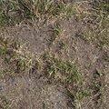 Soil 017