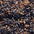 Sea Seaweed 022