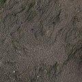 Sea Sand 010