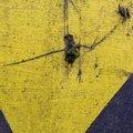 Concrete Painted 006