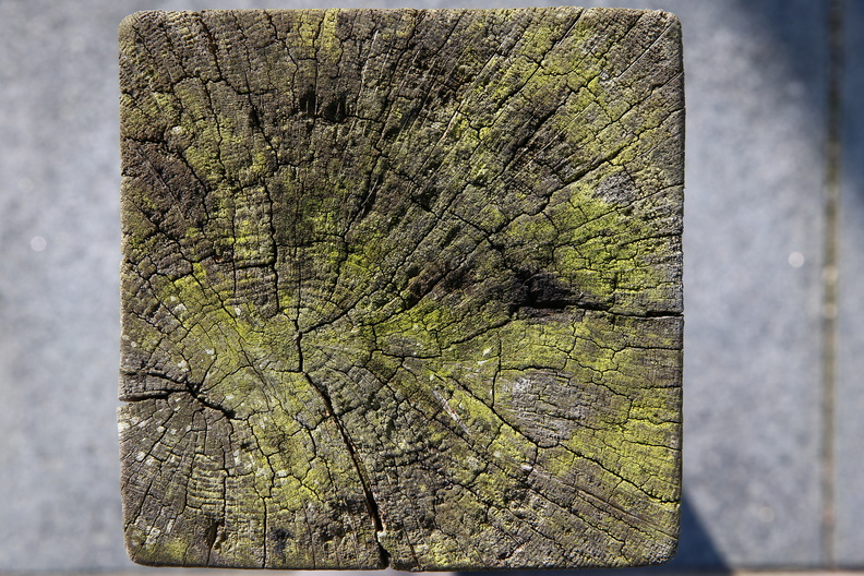 Nature_Tree_Rings_015.JPG