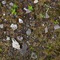 Debris Concrete 013