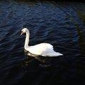 Fauna Bird 002