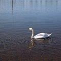 Fauna Bird 005