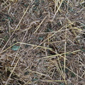 Agro Crop 006