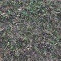 Agro Crop 009