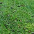 Nature Grass 030