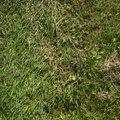 Nature Grass 031