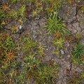 Nature Grass 033