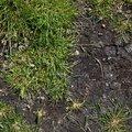 Nature Grass 036