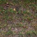 Nature Grass 039