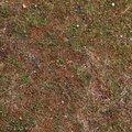 Nature Grass Flowers 019