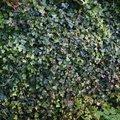 Nature Bushes 017