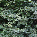 Nature Bushes 015